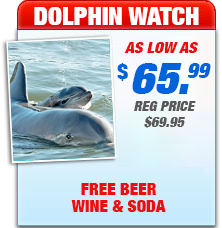 key west dolphins