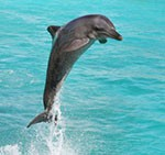 Key West Dolphin Watching