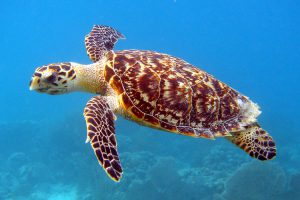 Florida Keys Eco-Discover Center's Discovery Saturday: Sea Turtles