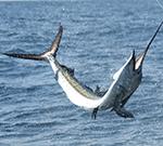 key west deep sea fishing charters