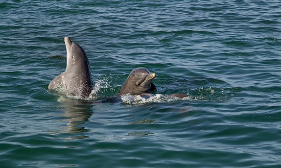 key west dolphins