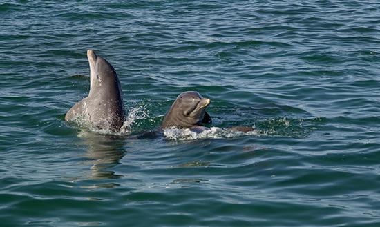 key west dolphin